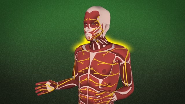 Industrial Ergonomics: Understanding Ergonomic Injuries